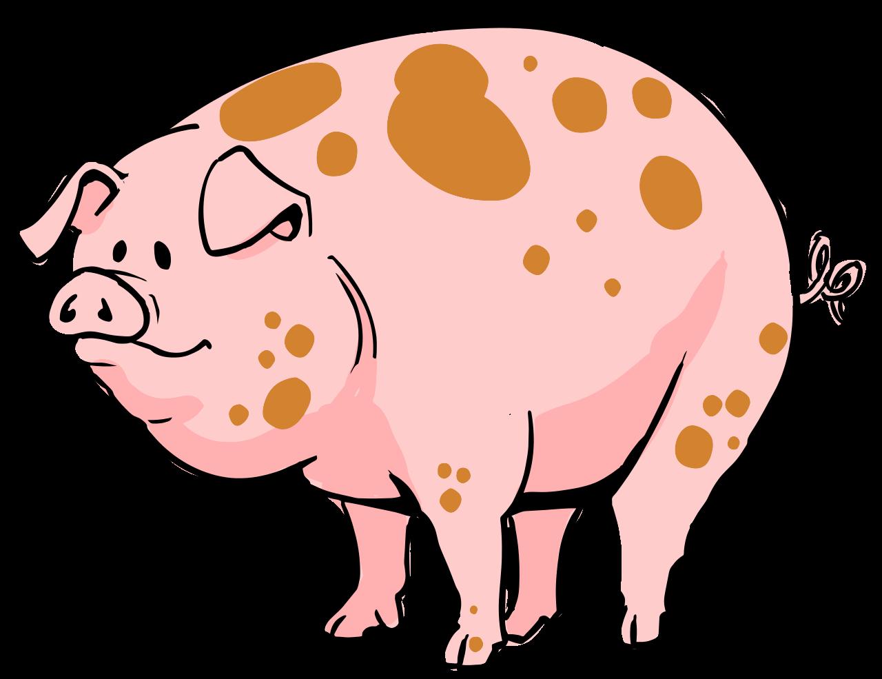 Bệnh dịch tả lợn (heo) châu Phi là gì?
